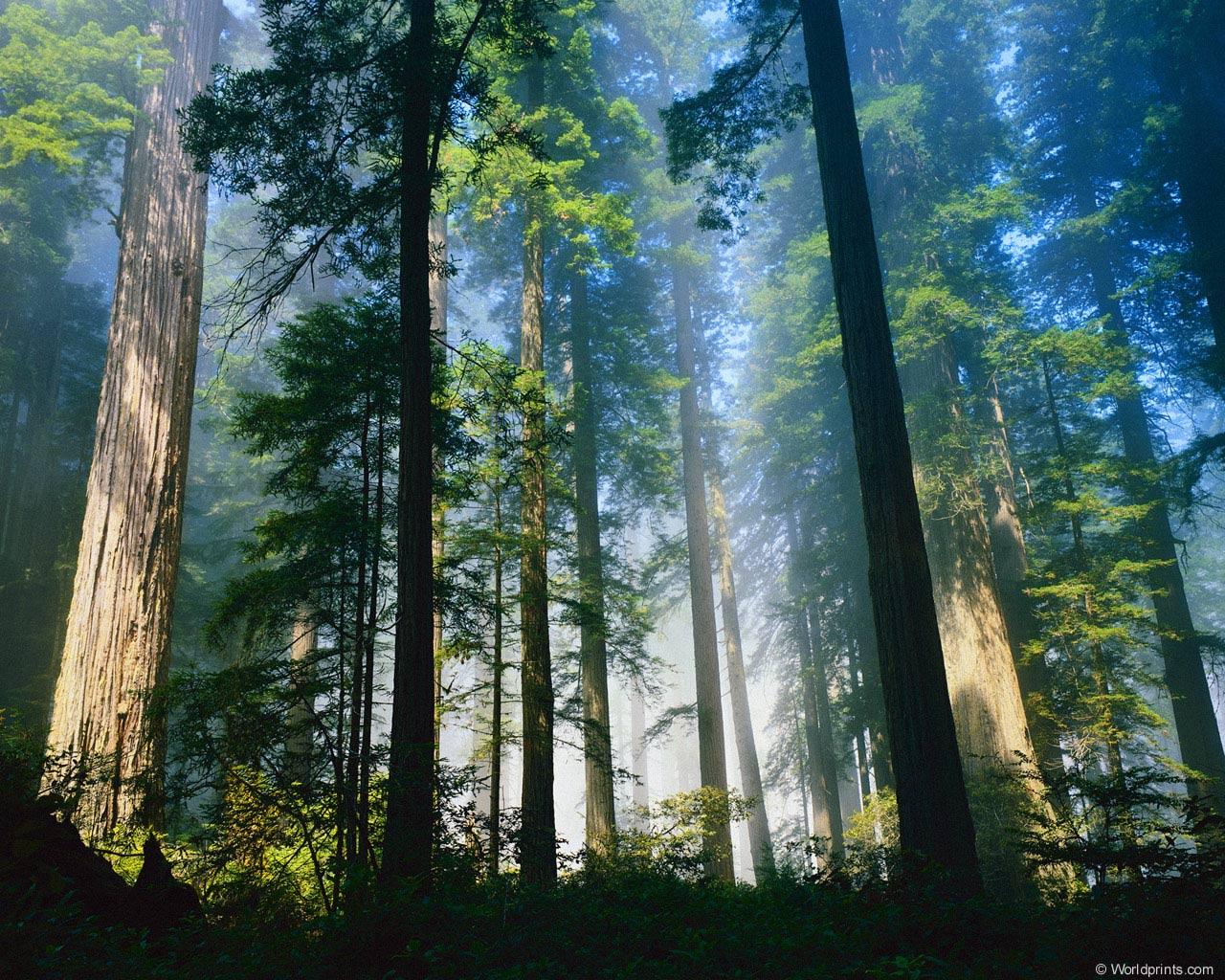 Лес 1 2 3 4 5 следующая